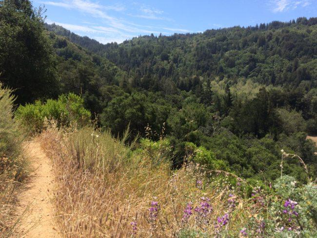 Pfeiffer Big Sur Mount Manuel Trail