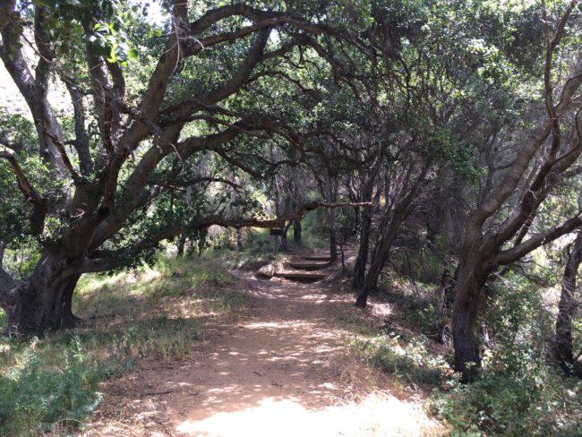 Pfeiffer Big Sur State Park Mount Manuel Trail